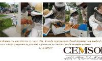 CEMSOB Cooperativas Exportadoras de Miel del Sud Oeste Bonaerense